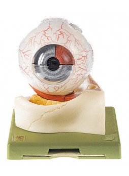 CS 1 Eyeball
